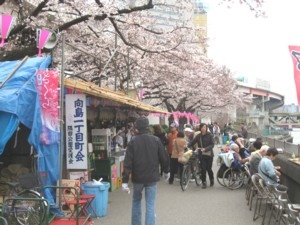 墨堤公園 桜並木2