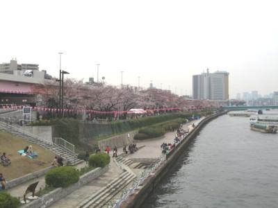 墨堤公園 桜並木3