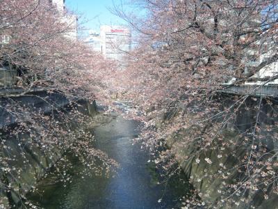 327神田川魚路