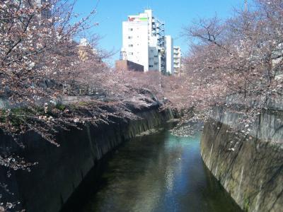 神田川桜上流