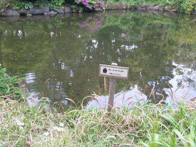 スッポン池