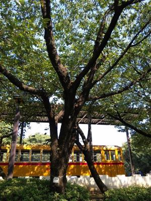 ウコンの木全景