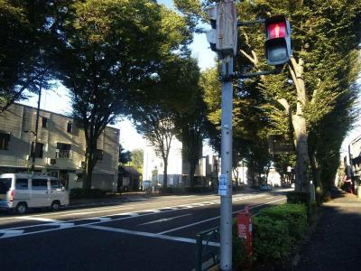 青梅街道ケヤキ並木2