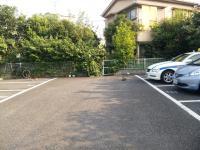 目白駐車場の猫