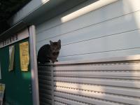 目白山紫町の猫