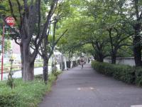 夏の木立1