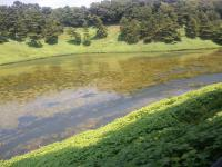藻異常繁殖1