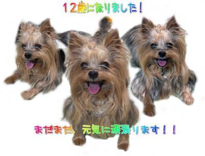3(スリー)ク-ちゃんズ