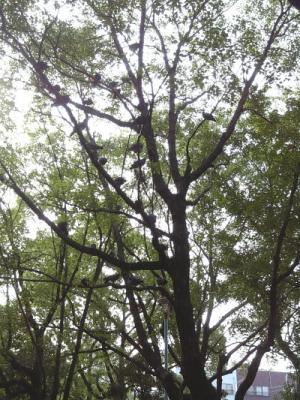 木に留まる公園の鳩