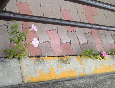 道ばたの花②