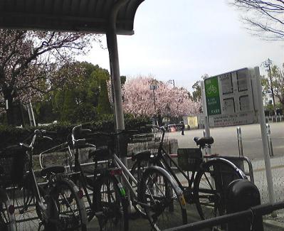 大阪城公園の入り口の桜