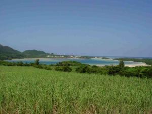 ishigaki20083.jpg