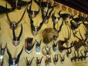 獲物のコレクション