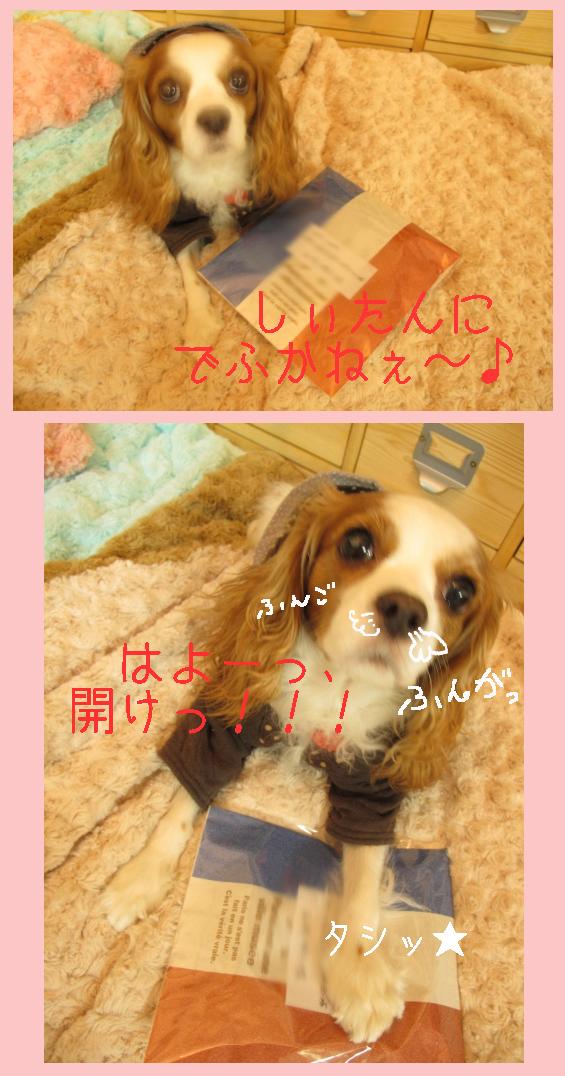 B_20091208061929.jpg