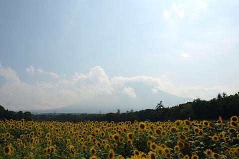 富士山とひまわり