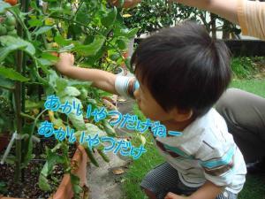 photo_4_20090718222214.jpg