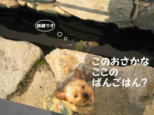 20090206itami2