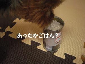 20090215koshihikari3