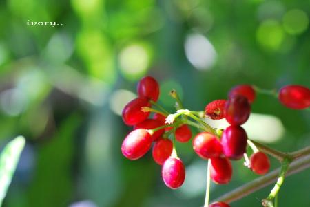 温室のお花