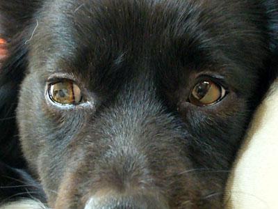 シータの目