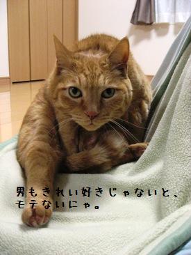 himawari11.jpg