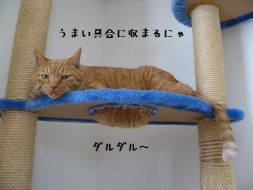 himawari14.jpg