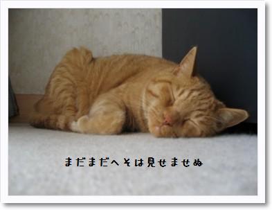 himawari15.jpg