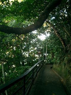 児玉神社への道