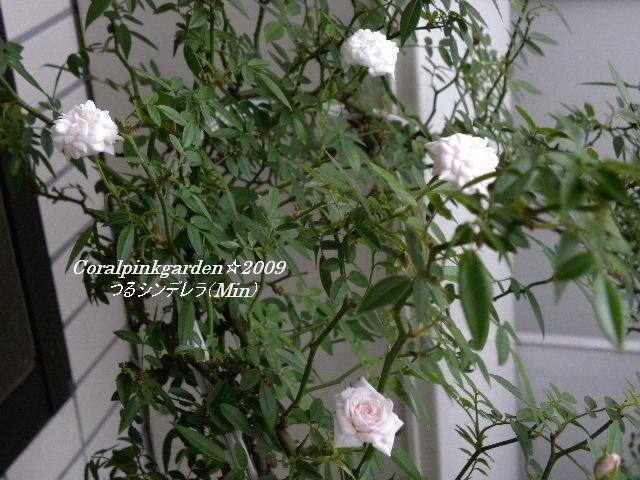 DSCN0224.jpg
