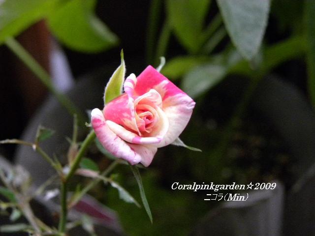 DSCN0339.jpg