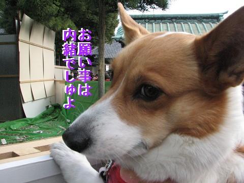 resize1344_20110102031337.jpg
