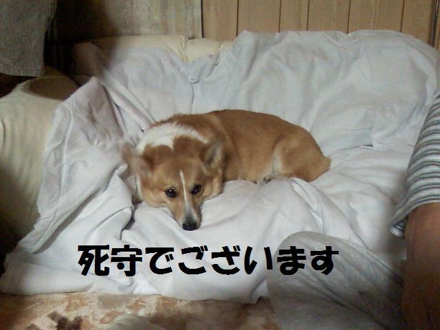 Image385~01