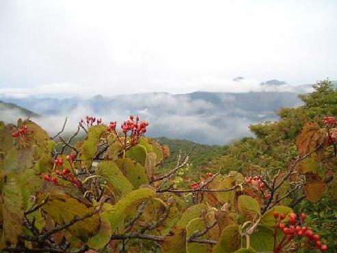 茶臼岳 下見2