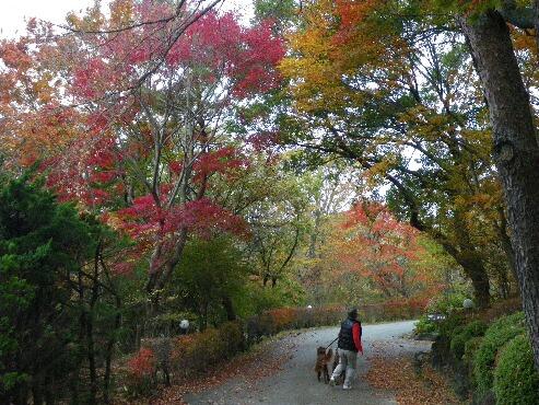 紅葉 散歩