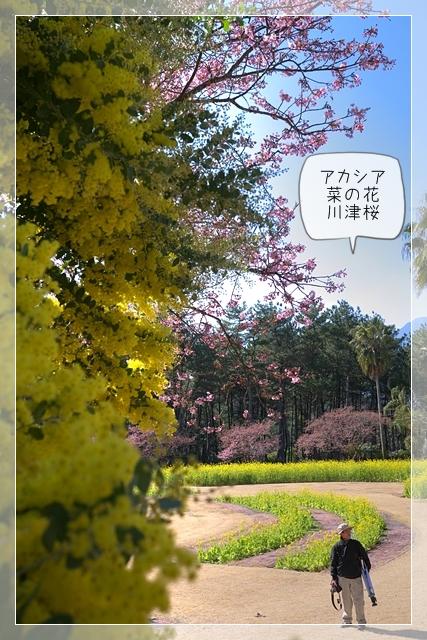 桜咲く18