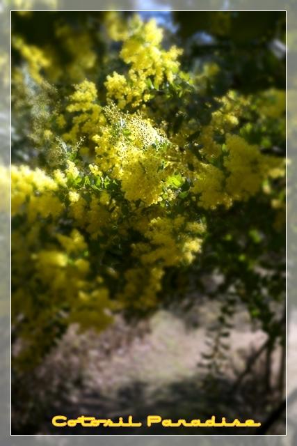 桜咲く15