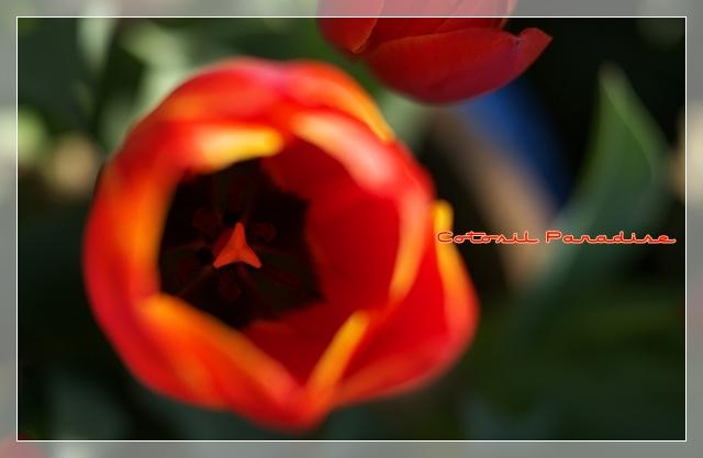 桜咲く22