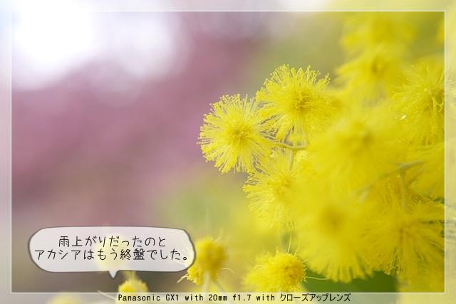 雨後の春06