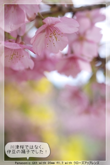 雨後の春04