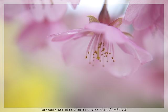 雨後の春05