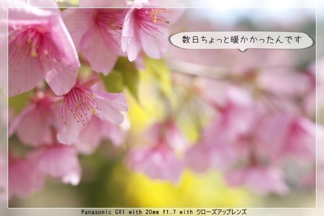 雨後の春03