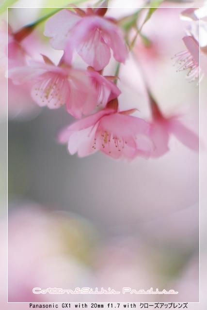 雨後の春02