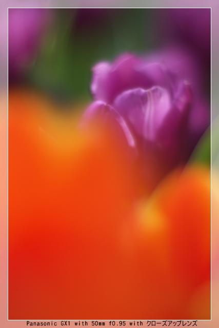 雨後の春12