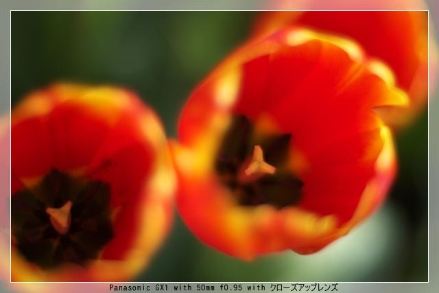 雨後の春10