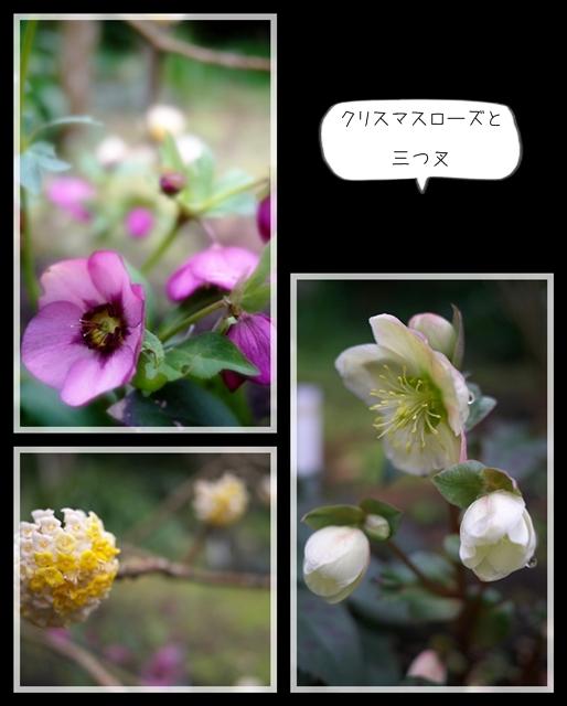 雨後の春09