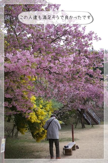 雨後の春20