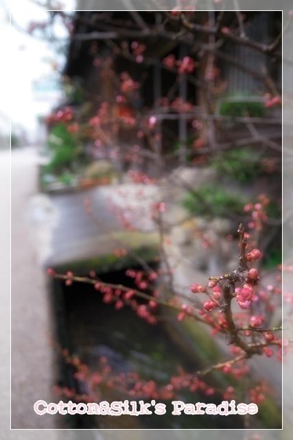 八本木宿08