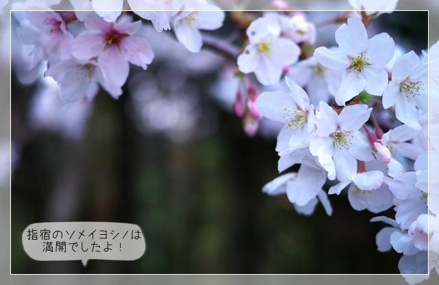 春のカット02