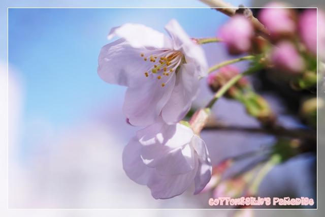 春のカット12