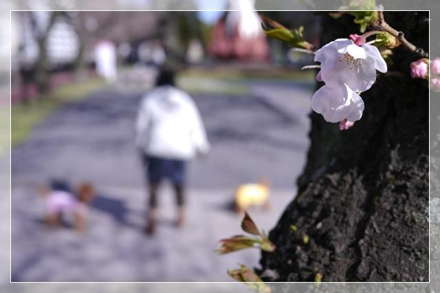 春のカット11
